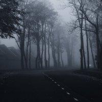 Синий туман :: shvlad
