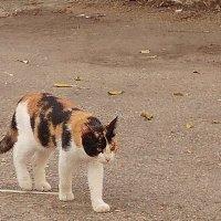Кошка. :: Валерьян Запорожченко