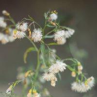 Растение :: Виктория Гавриленко
