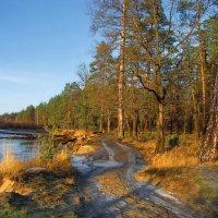 Когда ноябрь нам кажется апрелем... :: Лесо-Вед (Баранов)