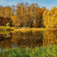 Пик осенней красоты природы. :: Николай Кондаков