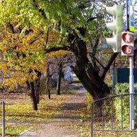 Ходит осень по дорожке :: Татьяна Смоляниченко