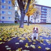 Друг мой цвета в осень... :: liudmila drake