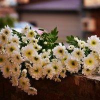 Цветы :: Ирина Комолова