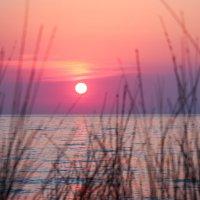 Заходящее солнце :: Елена Верховская
