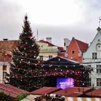 Рождественская ёлка на Ратушной площади :: Aida10