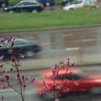 Дождь... :: Lilly