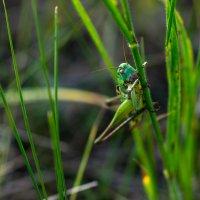 зелёненький он был... :: Константин