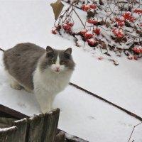 по первому снегу :: НАТАЛЬЯ