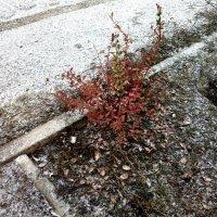 Первый снег :: Николай Филоненко