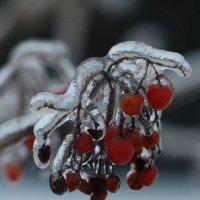 Метаморфозы декабря :: ZNatasha -