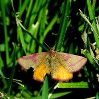 и снова бабочки 7 :: Александр Прокудин