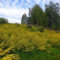 Цветущая земля. :: оля san-alondra