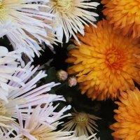 осенние цветы :: tina kulikowa