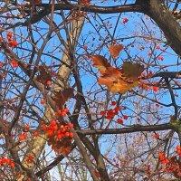 Осенние переплетения! :: Надежда