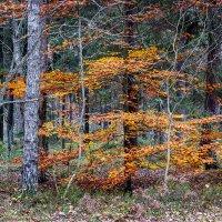 Осенний лес :: Андрей Николаевич Незнанов