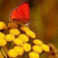 и снова бабочки 18 :: Александр Прокудин