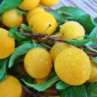 Помытые желтенькие :: Лидия (naum.lidiya)
