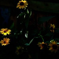 тайны цветов :: Бармалей ин юэй
