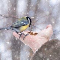 Покормите птиц :: Ирина Масальская
