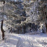 В зимнем лесу :: Наталия Григорьева