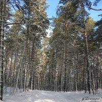 Зимняя сказка :: Дмитрий .