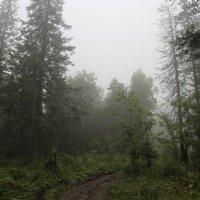 Туманный лес :: Олег Хайдуков