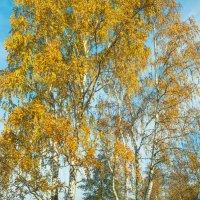 Осень на берегу озера Разлив (03) :: Виталий