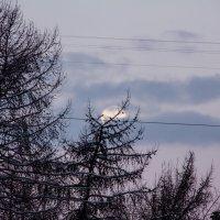 Про то, как пихта луну поймала :: Светлана marokkanka