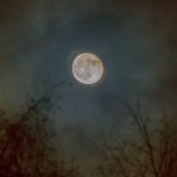 На небе ночном :: Валерий Симонов
