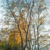 Осень на берегу озера Разлив (05) :: Виталий