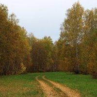 Лесной дорожкой... :: Олег Хайдуков