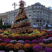 тыквенно-цветочное настроение :: Олег Лукьянов