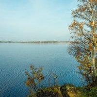 Осень на берегу озера Разлив (09) :: Виталий