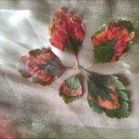 Осенние листья :: Надежда