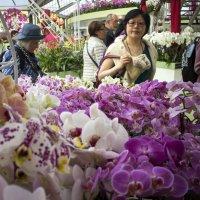 Королевский парк цветов (Keukenhof) :: Константин Подольский
