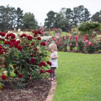 В розовом саду :: Alexandra Yudina