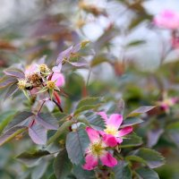 Цветы. :: юрий