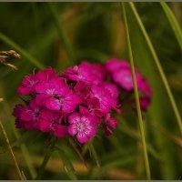 Цветок 1515 :: Марина Никулина