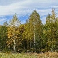 Картинка зелёной осени :: Милешкин Владимир Алексеевич