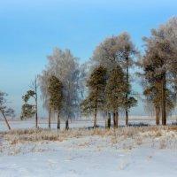 Снежный день :: Нэля Лысенко