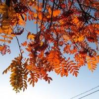 октябрь :: tgtyjdrf