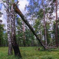 В лесу :: олег