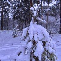 Ма-а-а-ленькой ёлочке тяжело зимой! :: Михаил Полыгалов