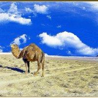 Пейзаж с верблюдами :: Анатолий Чикчирный