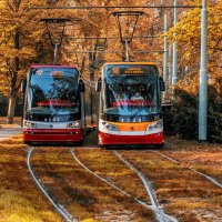 Two trams in the autumn park :: Dmitry Ozersky