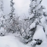 Лес под снегом холодеет... :: Galaelina ***
