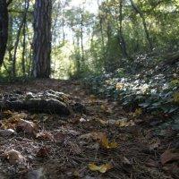 В осеннем лесу :: Виктория Попова