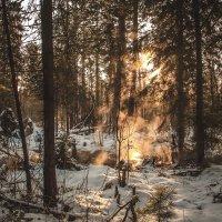 Просто лес. :: Вадим Басов