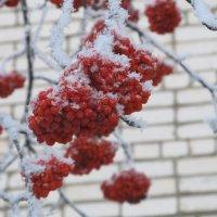 первый день зимы! :: Елена Шаламова